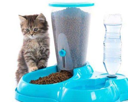 Pet Supplies Online